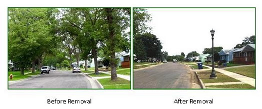 before and after tree removal